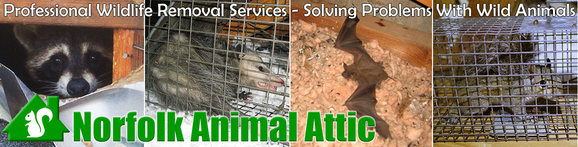 Braintree Town City Animal Attic
